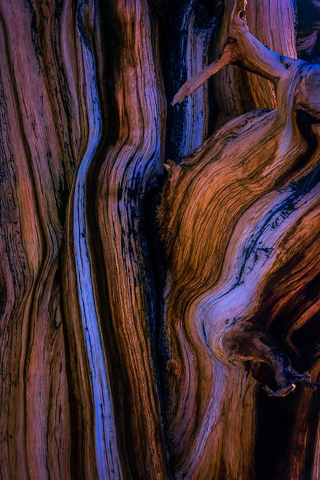 An intimate capture of both the warm and cool tones of light reflected on the textures of this old bristlecone at nearly 14,000 feet in elevation.