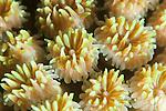 Super macro shot of polyps on a reef at keramas Islands Okinawa Japan.