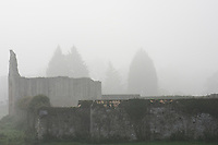 The ruins of the 12th Century Godstow Abbey rise eerily out of the mist on a foggy morning along the Thames near Oxford.