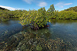 Shallow reefs by the mangroves of Raja Ampat.