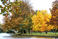 Autumn colour in the trees lining the River Ouse embankment at Bedford, UK Thursday October 22nd 2020<br /> <br /> Photo by Keith Mayhew