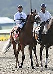 29 July 2009: Wolf Tail (2yo c by Strive) wins the Graduation Stakes under jockey Joel Rosario at Del Mar Race Track, Del Mar, CA