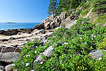 Sand Beach in Acadia National Park, Downeast, ME, USA