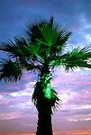 Lit Palm tree, Santa Monica, 2008