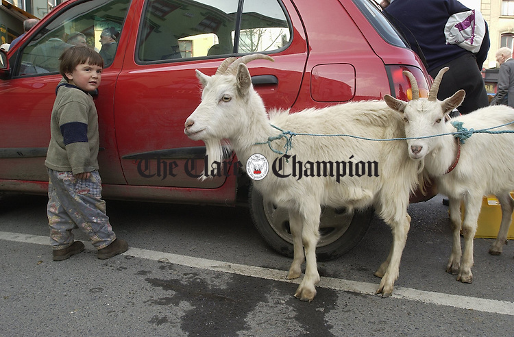 Little Frank O Dea from Cree with his goats at the horse fair in Kilrush. Photograph by John Kelly.