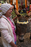 Alacati, Turkey: the Ot Festivali or Herb Festival held in spring every year. The procession through town for 2014 was led by a donkey with paniers full of herbs.