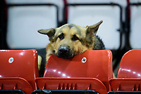 A guide dog waits for the game to start<br /> <br /> Photographer Chris Vaughan/CameraSport<br /> <br /> The EFL Sky Bet League Two - Lincoln City v Exeter City - Tuesday 26th February 2019 - Sincil Bank - Lincoln<br /> <br /> World Copyright © 2019 CameraSport. All rights reserved. 43 Linden Ave. Countesthorpe. Leicester. England. LE8 5PG - Tel: +44 (0) 116 277 4147 - admin@camerasport.com - www.camerasport.com