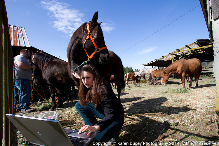 Hannah Mueller, DVM, co-founder and vice president of the Northwest Equine Stewardship Center and practice owner of Cedarbrook Veterinary care and Liana Wiegel, DVM Equine Practitioner from Pilchuck Veterinary Hospital, and volunteer Donny Inwell, all from Snohomish, Wash. groom horses on April 1, 2014.  The horses belong to Summer Raffo, who died in the Oso mudslide on March 22, 2014.  Alexis Blakey, a friend of Raffo's has been taking care of the horses while Raffo's family decides what to do with them.
