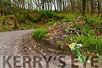 A bunch of daffodils left where Damien Lyne had a tragic fall on Friday