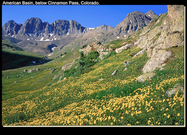 """The alpine flower season lasts just a few weeks at each elevation, American Basin (12,300 feet).<br /> From John's 3rd book """"Mastering Nature Photography"""". John offers private, photo tours of Colorado's mountains. .  John leads wildflower photo tours into American Basin and throughout Colorado. All-year long. John guides custom photo tours in the Sneffels Range and throughout Colorado."""