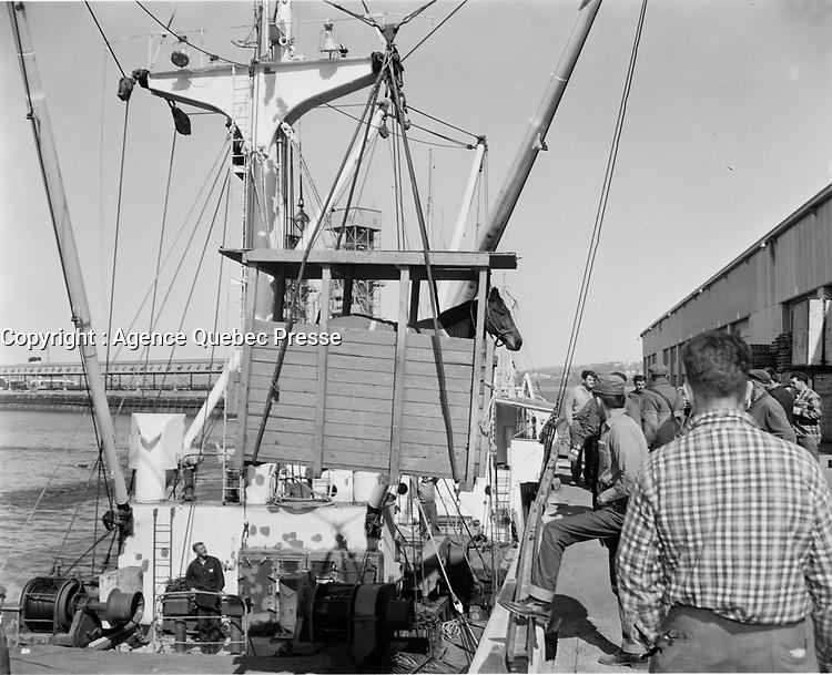 Industrie maritime : <br /> Transport d'animaux en bateau,date inconnue