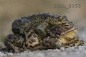 Carl, ANIMALS, wildlife, photos(SWLA2165,#A#)
