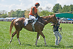 25 Apr 2009: 25 Apr 2009: Perkedinthesand, ridden by Jeff Murphy, after winning the Daniel Van Clief Memorial filly and mare allowance hurdle race at the Foxfield Races in Charlottesville, Virginia. Perkedinthesand is owned by Mrs. S. K. Johnston, Jr and trained by Jack Fisher.