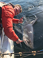 BNPS.co.uk (01202) 558833. <br /> Pic: AnglingAndAnxiety/BNPS<br /> <br /> With Video - Download: https://we.tl/t-WGwExzoqIw<br /> <br /> Pictured: Kevin ticked the porbeagle shark off his list earlier this year. <br /> <br /> An angler who only took up the sport a year ago has caught the 'big four' of native sea fish by landing a deadly 256lb thresher shark.<br /> <br /> Kevin Finch is one of just a handful of fisherman to have claimed all four big game species.<br /> <br /> Video footage shows the dramatic moment Kevin pulled in the 6ft long shark, with a tail as long as it's body, alongside his boat off the coast of Bournemouth, Dorset.