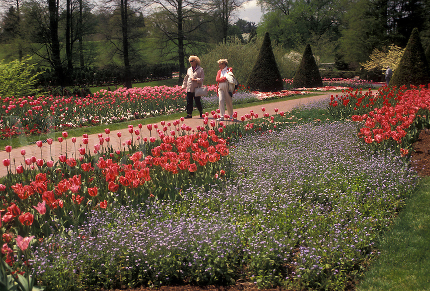 AJ3441, Longwood Gardens, Brandywine River Valley, Kennett Square, Pennsylvania, People walk through the garden of pink and red tulips at Longwood Gardens in the springtime in Kennett Square along the Brandywine Valley in the state of Pennsylvania.