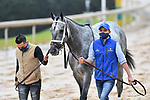 February 27, 2021: #1, Essential Quality before the Southwest Stakes (Grade 3) at Oaklawn Park in Hot Springs, Arkansas. Ted McClenning/Eclipse Sportswire/CSM