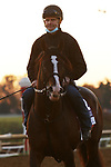 War Of Will, trained by trainer Mark E. Casse, exercises in preparation for the Breeders' Cup Dirt Mile at Keeneland Racetrack in Lexington, Kentucky on November 5, 2020.
