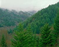 Rain storm on the summit of the Coast Range, OR