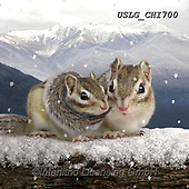 CHIARA,REALISTIC ANIMALS, REALISTISCHE TIERE, ANIMALES REALISTICOS, paintings+++++,USLGCHI700,#A#, EVERYDAY ,photos