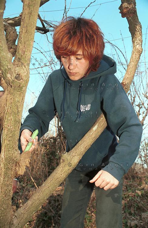 cascina Pirola, a Zelata di Bereguardo (PV), Agricoltura Biodinamica, filosofia antroposofica di Rudolf Steiner . Letame pennellato sul tronco di un albero.