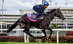 October 31, 2018 : My Gal Betty, trained by Roger L. Attfield, exercises in preparation for the Breeders' Cup Juvenile Fillies Turf at Churchill Downs on October 31, 2018 in Louisville, Kentucky. Carolyn Simancik/Eclipse Sportswire/CSM