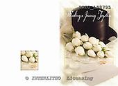 Alfredo, WEDDING, photos, BRTOLP8795,#w# Hochzeit, boda