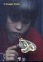 LE26-033z  Cecropia Moth on house screen, boy touching through screen, Hyalophora, cecropia