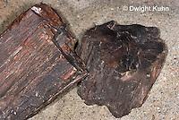 CX15-523z Petrified Wood Fossil