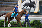 SHA TIN,HONG KONG-APRIL 27: Safety Check ,trained by Charlie Appleby,exercises in preparation for the Champions Mile at Sha Tin Racecourse on April 27,2016 in Sha Tin,New Territories,Hong Kong (Photo by Kaz Ishida/Eclipse Sportswire/Getty Images)