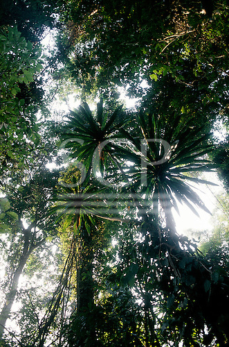 Burundi. Mixed forest with radiating palms and other trees.