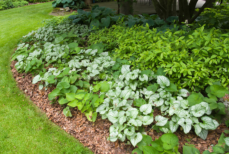Brunnera Jack Frost, Viola, lawn grass, deck and gazebo, beautiful garden landscaping for shade