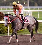 30 January 2010: and jockey after the Sunshine Millions  Stakes at Gulfstream Park in Hallandale Beach, FL.