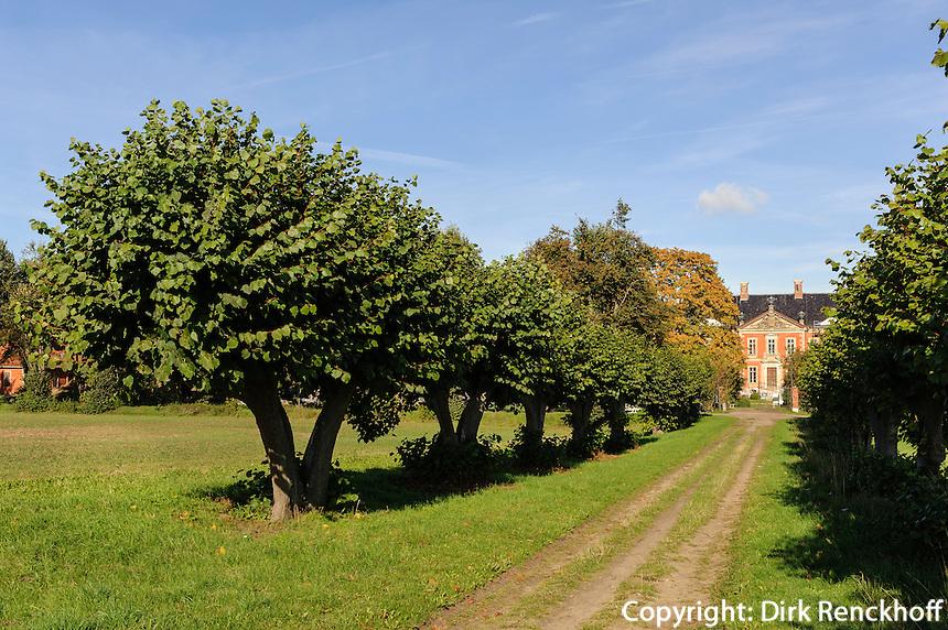 Lindenallee zum barocken Schloss Bothmer, Mecklenburg-Vorpommern, Deutschland