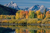 Aspens at Oxbow Bend,  Snake River <br />   and the Grand Teton,  Teton Range<br /> Grand Teton National Park<br /> Rocky Mountains,  Wyoming