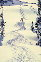 Single track in foot deep powder leads your eye to a skier on an open slope. Ray Nelson. Utah, Alta Ski Resort.