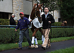 Two-time Horse of the Year Wise Dan parading at Keeneland. Samantha Bussanich/ESW/Cal Sport Media