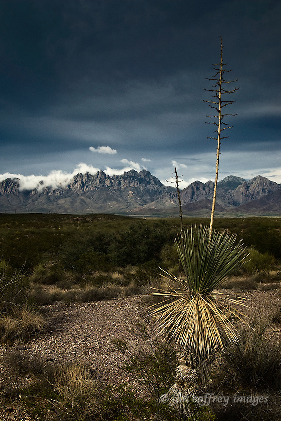 A lone yucca stands before the Organ Mountains in southern New Mexico as storm clouds creep over the peaks.