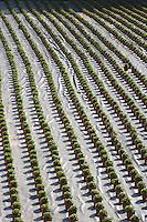 Europe/France/Midi-Pyrénées/46/Lot/Saint-Géry: pépinière dans la vallée du Lot - Alignement de pots de fleurs