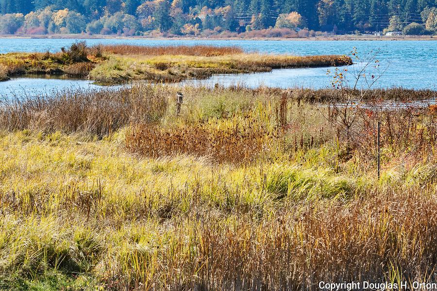 Fall color along trail through Theler Wetlands Nature Preserve, on Hood Canal, fiord, Washington, Belfair, Washington.  Trails, hiking, boardwalks and wildlife.