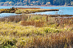 Fall color along trail through Theler Wetlands Nature Preserve, on Hood Canal, fiord, Washington, Belfair, Washington.  Trails, hiking, boardwalks and wildlife.