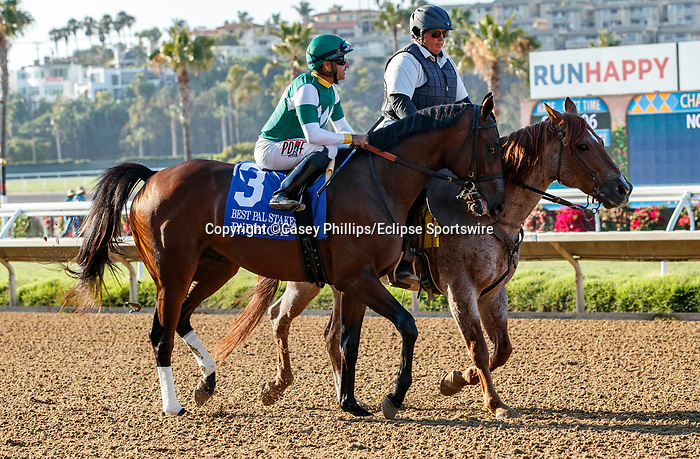 DEL MAR, CA  AUGUST 7:  #3 Pappacap, ridden by Joe Bravo, in the post parade before the Best Pal Stakes (Grade ll) on August 7, 2021 at Del Mar Thoroughbred Club in Del Mar, CA.(Photo by Casey Phillips/Eclipse Sportswire/CSM)