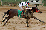HOT SPRINGS, AR - FEBRUARY 19: Altito #5, with jockey Ramon Vazquez aboard winning the 3rd race at Oaklawn Park on February 19, 2018 in Hot Springs, Arkansas. (Photo by Justin Manning/Eclipse Sportswire/Getty Images)