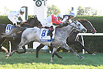 LEXINGTON, KY - OCTOBER 08:  #7 Miss Temple City wins the Shadwell Turf Mile over #8 Ironicus and #10 Tourist at Keeneland on October 8, 2016 in Lexington, Kentucky. (Photo by Jessica Morgan/Eclipse Sportswire/Getty Images)