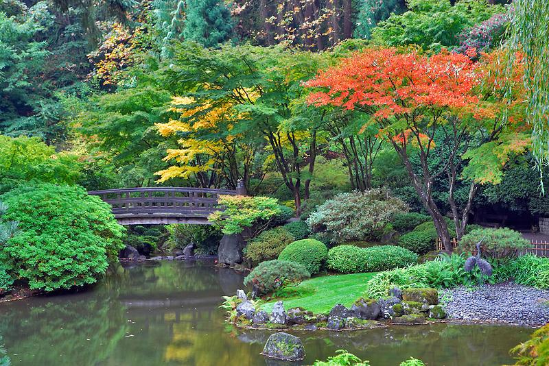 Fall color in Japanese Gardens. Portland. Oregon