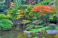 Fall color in Japanese Gardens. Portland. Oregon