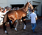 March 2010: Rachel Alexandria is led into the paddock before the 1st running of the New Orleans Ladies at the Fairgrounds in New Orleans, La.