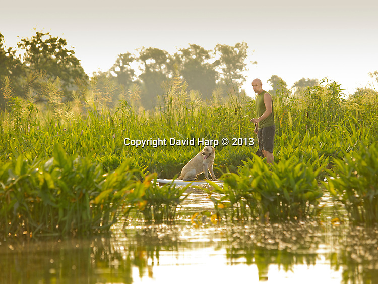 Joel Shilliday and his companion, Hooper, paddle through a stand of wild rice on Kinds Creek.