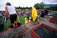 Competitors competing in Grape Stomping Competition, at annual Festival of the Grape, Oliver, BC, South Okanagan Valley, British Columbia, Canada