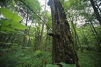 Foresta di Bialowieza, funghi