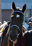 09 September 19: Elusive Galaxy prior to the grade 3 Natalma Stakes for two year old fillies at Woodbine Racetrack in Rexdale, Ontario.